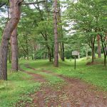旧二本松街道の松並木