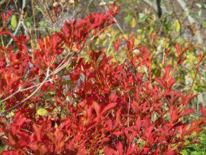 湖手前の紅葉